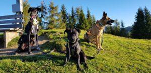 Laika, Hope und Snoopy